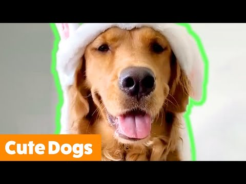 Cute Dogs That Will Make You Smile | Funny Pet Videos