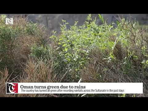 Oman turns green due to rains