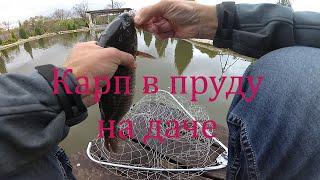 Уроки разведение карпа в пруду на даче