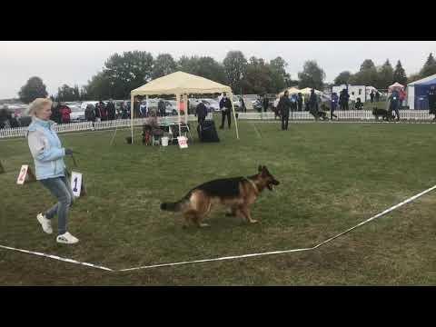 Wideo1: Wystawa psów Prestige w Lesznie