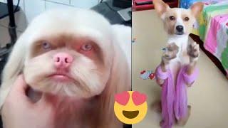 Meilleures Vidéos Drôles de Chat et de Chien 🐶🐱- Best Funny DOGS et CATS #69