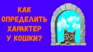 Как узнать характер кошки? 😺 Прикольный тест с котом Тимкой