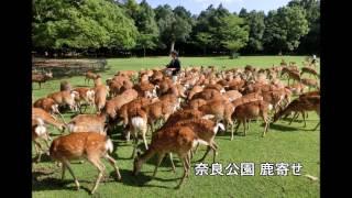 奈良県のええところ~観光名所紹介~
