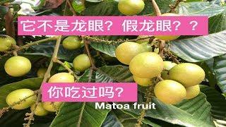 番龙眼功效与作用.Matoa  Fruit Benefits ( Pometia)