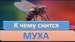 К чему снятся Мухи видео -К чему снится муха