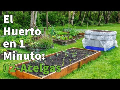 Plantón ecológico de Acelga Verde Pack 6 ud 54x43 mm