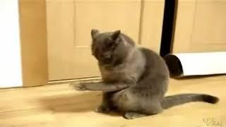 Все приколы про животных в одном видео  Смех до слёз