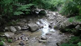 初夏の森林浴Earlysummerforest2017年7月