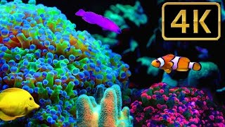 STUNNING TIME-LAPSE SHOWS CORAL REEF
