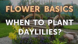 When To Plant Daylilies?