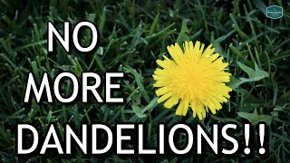 EASILY Remove DANDELIONS From Your Lawn For Good!