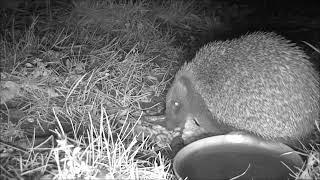 Wildlife Trail Camera - 10.1.2019