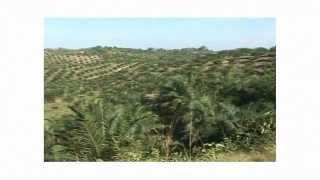 Initiation à la gestion durable des forêts tropicales (GIZ)