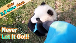 Panda Cub Latches Onto Keeper's Leg | iPanda