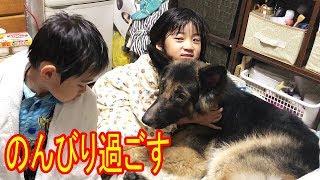 大型犬・シェパード・秋田犬・ノンビリ過ごしてます