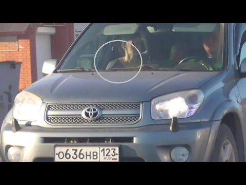 ОГИБДД Дяткин выбил страйк! ст.Ленинградская