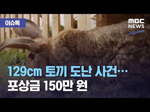 129cm 토끼 도난 사건…포상금 150만 원