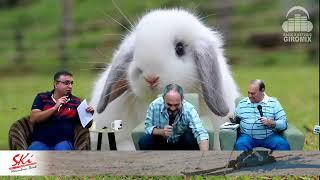 Qual o melhor coelho para espaço reduzido?