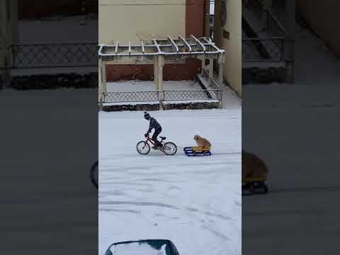 Dog Goes for a Towed Sled Ride