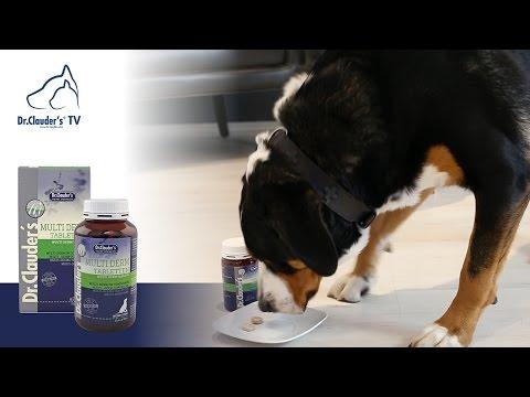 Dein Hund hat Fellprobleme? 🐶