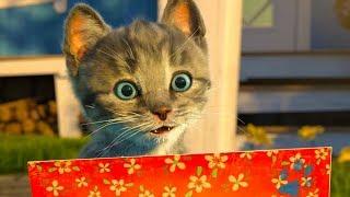 ПРИКЛЮЧЕНИЕ МАЛЕНЬКОГО КОТЕНКА в смешном мультике для детей / Мультфильм про котиков #ПУРУМЧАТА