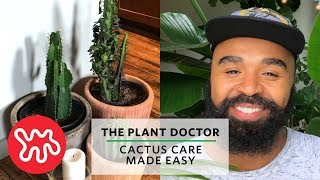 Cactus Care Made Easy | The Plant Doctor
