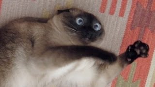 Cats just never fail to make us laugh - Funny cat compilation