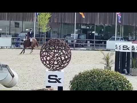 9yo mare for sale