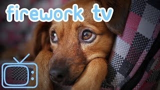 TV for Dogs on Bonfire Night & Diwali! Distract Dogs From Loud Noises!