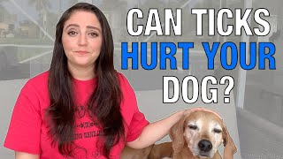 How To Remove TICKS From a Dog | Tick-Borne Disease & SYMPTOMS To Watch For - Download this Video in MP3, M4A, WEBM, MP4, 3GP