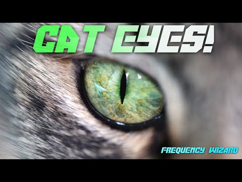 Get Cat Eyes Fast! Subliminals & Frequencies Hypnosis Spell