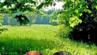Мелодия Любви   Лёгкая,красивая,нежная музыка   Моим подругам! Swetlanaroma@mail ru