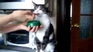 Домашние Животные, Самые прикольные коты!!!
