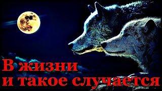 Истории на ночь: В жизни и такое случается