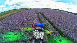 Blue fields - Fpv drone