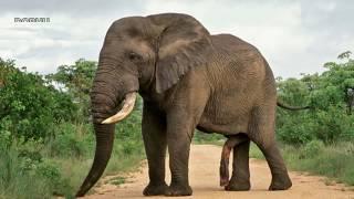 12 Unexpected Examples of Animal Genitalia