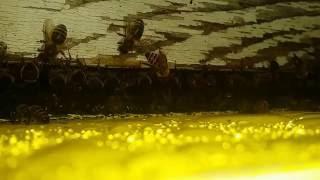 Looking Inside The Front Door Of The Hive
