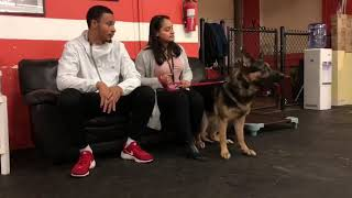 Leash Reactive Dog Starts Board and Train | Keeko