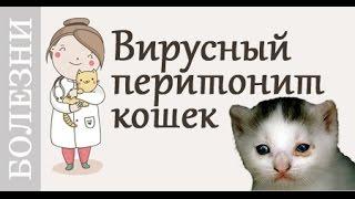Вирусный перитонит (FIP) кошек. Советы ветеринара