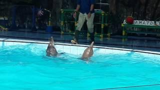 Lumba-lumba joget dangdut