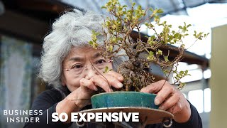 Why Bonsai Are So Expensive   So Expensive