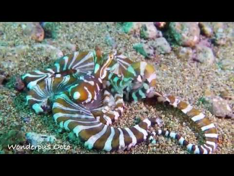 Atmosphere Resort - Scuba Diving House Reef & Dauin Coastline - Philippines