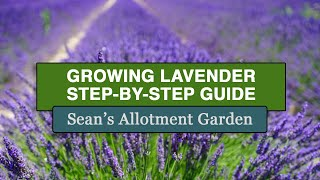 Gardening Made Easy: How to Grow#Lavender (Complete Step-by-Step Guide)