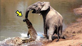 TOP 10 Cuando Te Metes Con El Animal Equivocado Ep. 6 | Batallas Animales Captados En Cámara