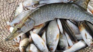 Рыболовные места на реке москва