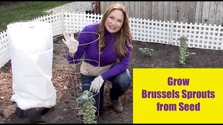 GROW BRUSSEL SPROUTS FROM SEED - For Beginners!
