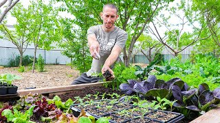 How to Transplant Seedlings into the Garden, 4 Mistakes you MUST Avoid