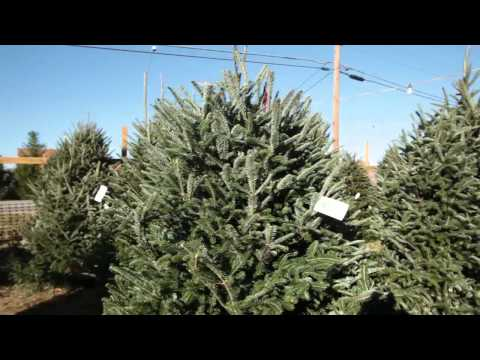 , title : 'Tips for a Successful Christmas Tree Retail Lot