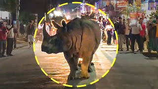 Incredible Cases Of Wild Animals On The Streets!