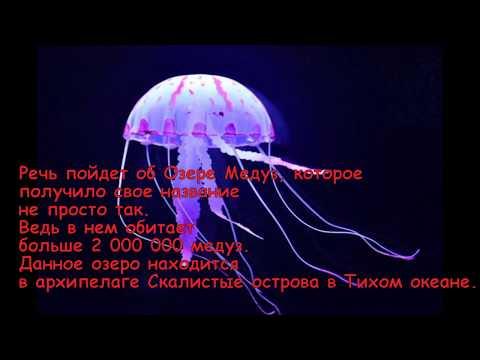 Озеро медуз убийц!!!!